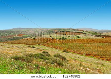 Fields of Galilee in Israel in the Spring