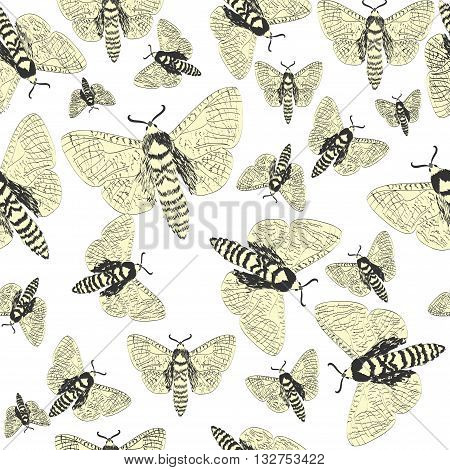 Hand drawn  seamless Butterfly Pattern  - vector background