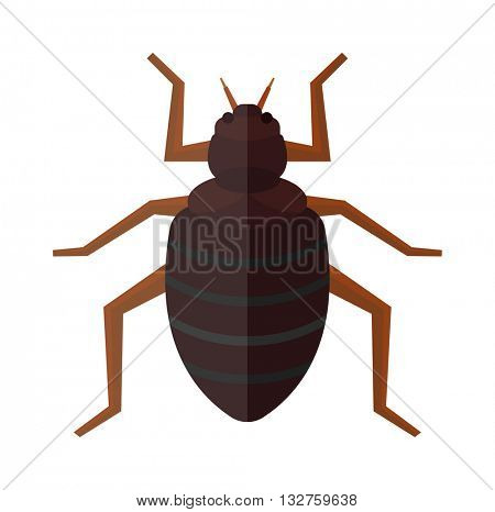 Beetle bug insect isolated on white background vector