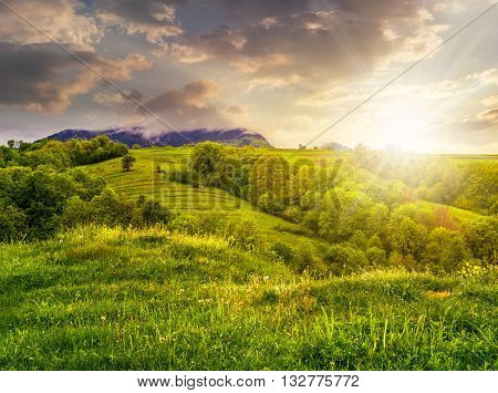 Fruit Garden On Hillside Meadow In Mountain At Sunset
