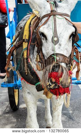 Colorful decorated donkey (called Burro-taxi) waiting for passengers in Mijas, tourist resort near Malaga, Costa del Sol, Spain