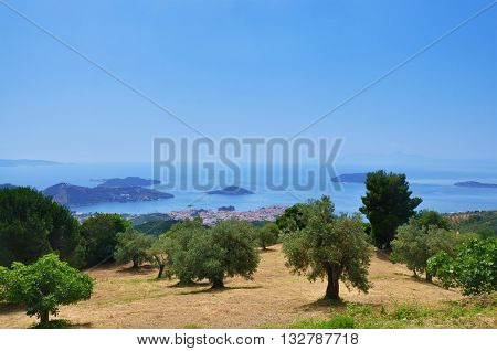 Landscape with olive trees in Skiathos island