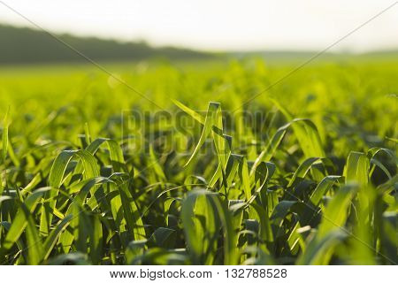 Sown Farm Field