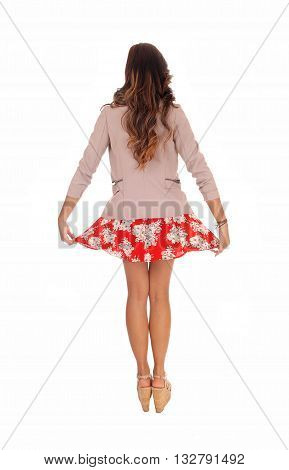 Young lovely woman in a red dress and jacket holding up her short dress standing from the back isolated for white background.