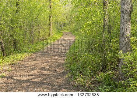 A trail in the woods during spring.