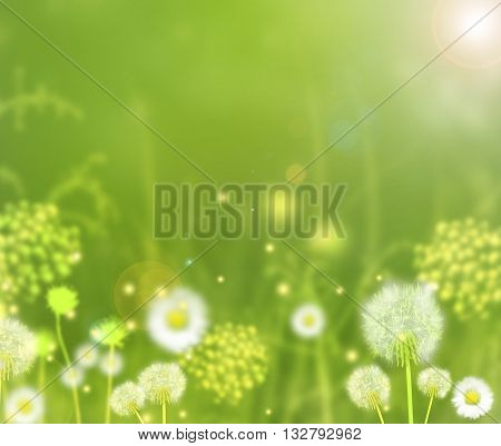Beautiful spring summer day with sun light and field flowers and plants.