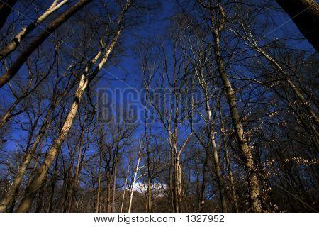 在天空中的树木