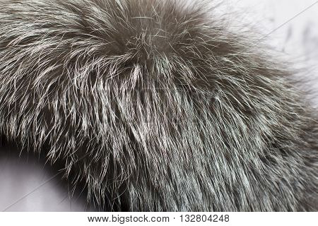 Close-up Of Animal Fur, Fur Collar, Fur Color For Texture Or Background