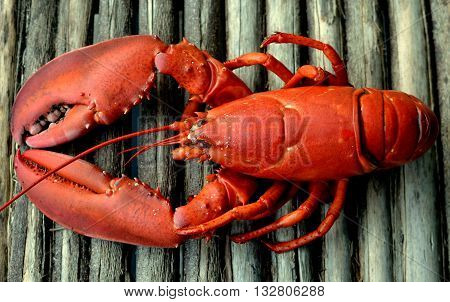 Red Lobster: Cooked whole lobster shown on a rustic wooden table