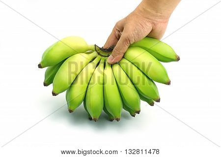 Pisang Awak banana Kluai Nam Wa. Green cultivate banana on isolate white background. Hand grabbing bananas.
