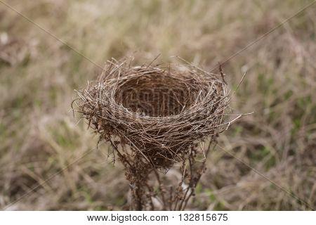 Bird's nest on a bush in a field