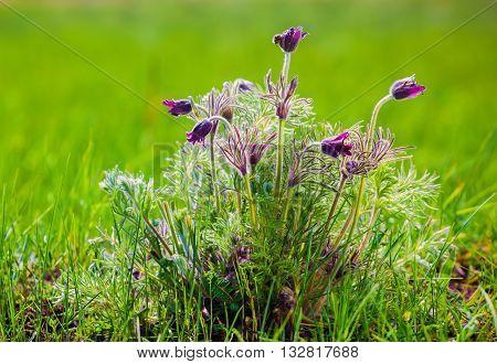 Scrub dream grass on the green field