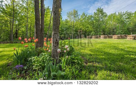 Tulips and flower garden .   Country front lawn springtime and sunny day setting for an outdoor back yard wedding.