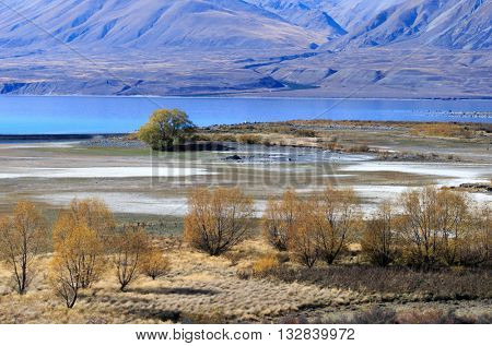 Landscape image of trees and mountains around Lake Tekapo in the glacier valley in Canterbury, New Zealand.