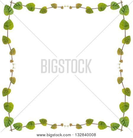 green creeper plant frame isolated on white background