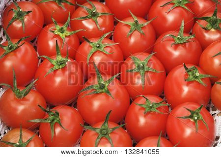 LOTS OF FRESH CHERRY TOMATOES , LANDSCAPE VIEW PHOTO