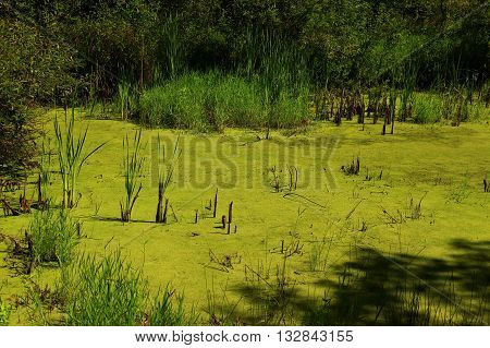 a picture of an exterior Pacific Northwest forest pond in summer