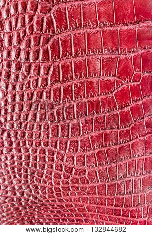 red crocodile leather texture used for background