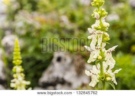Blooming Flowers Plants.