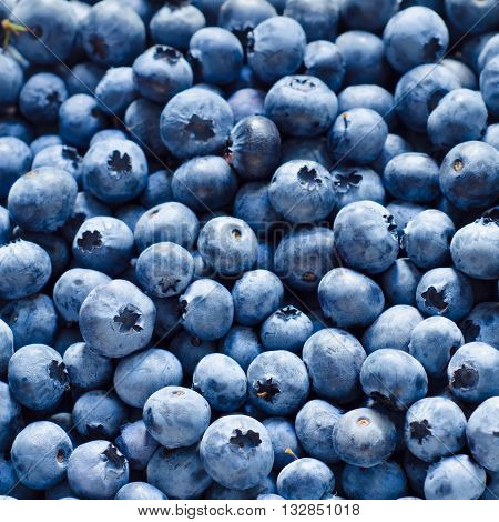 a lot of blueberry as a background