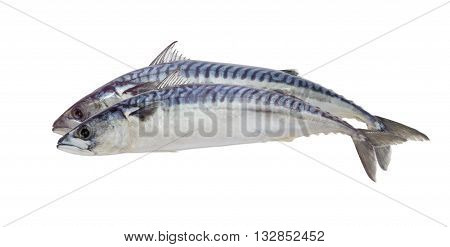 Two whole uncooked atlantic mackerel on a light background