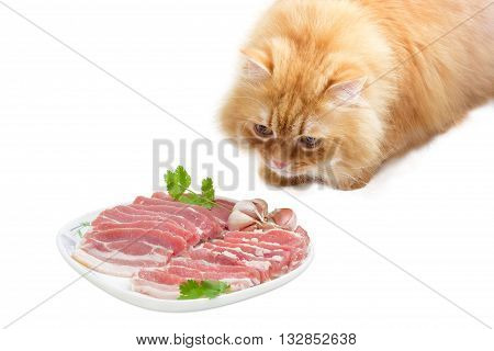 Red domestic cat that looks at a dish with uncooked streaky pork belly bacon on a light background