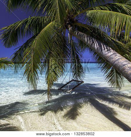 Пальма над океаном, palm tree over the ocean