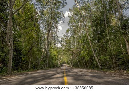 The road is surrounded by forest. Beautiful nature.