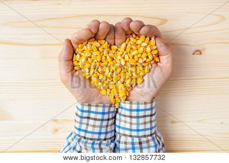 Handful of harvested corn seed heart shaped pile top viewof adult caucasian male farmer holding pile of maize grains on wooden table.
