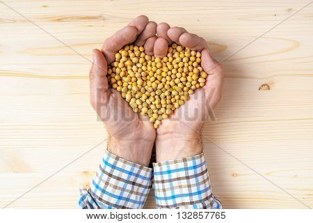 Handful of harvested soybeans heart-shaped pile top view of adult caucasian male farmer holding pile of maize grains on wooden table.