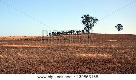 After harvesting on the field, Western Plains, NSW, Australia