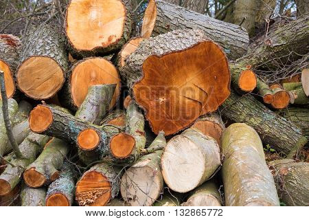 Pile of cut logs in a forest ready for collection