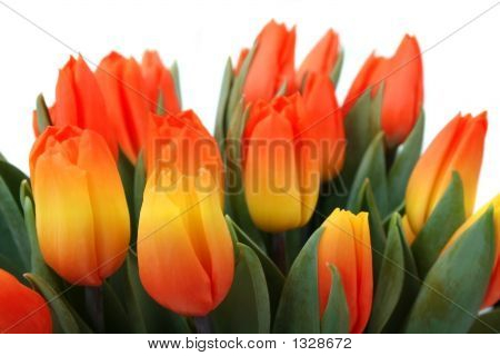 Bunch Of Lovely Red And Yellow Tulips