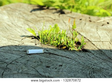 stub of cigarette are lying on a tree stump germinating