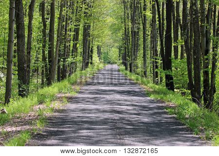 Trees and shadows. Trees line this shadow covered, long roadway.