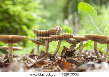 low angle shot showing a group of light brown mushrooms in blurry natural forest ambiance