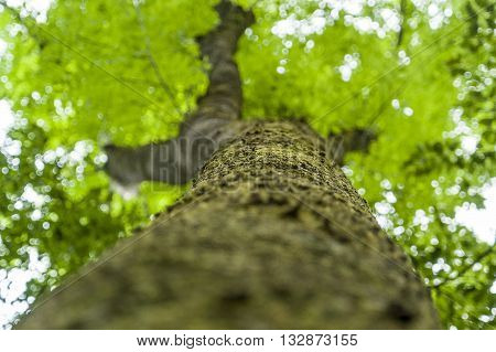 extreme low angle shot of a tree at spring time