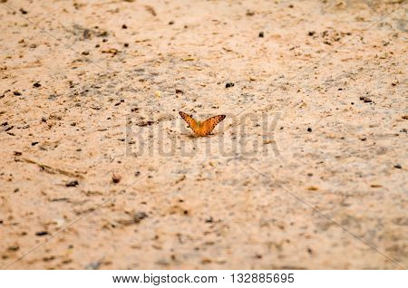 image of butterfly landed on the floor