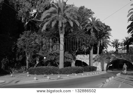Early morning walking on the road of Palm trees on Kos Island.