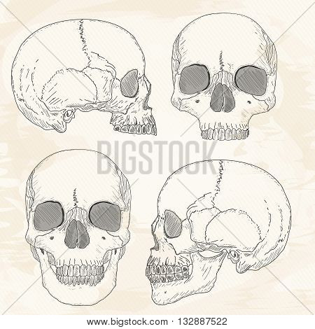 Human skull hand drawn vintage sketch vector illustration