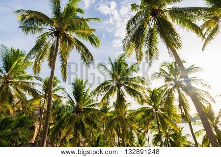 Palm Trees Against Blue Sky Background.