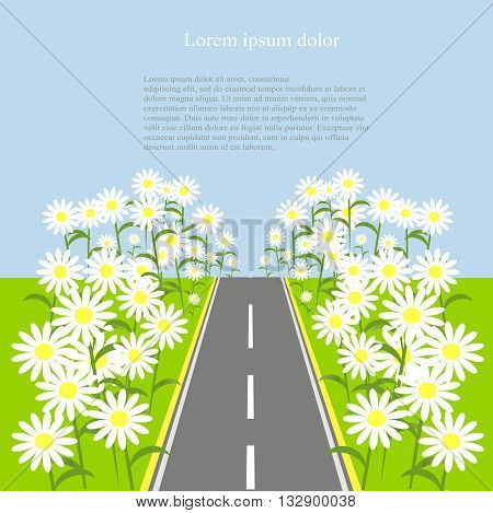 Grey road with white daisies on the green roadside, blue sky, background, vector illustration