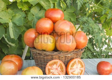 basket with tomatoes, fresh tomatoes in the field,Half of tomato