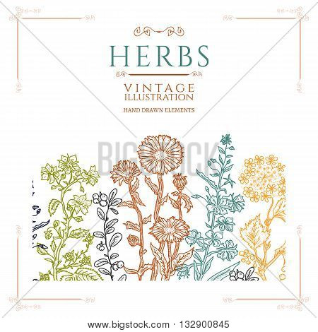 Medical herbs vintage template hand drawn sketch
