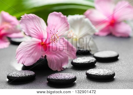 Beautiful Spa Concept Of Pink And White Hibiscus Flowers, Leaf  On Zen Basalt Stone With Drops, Clos