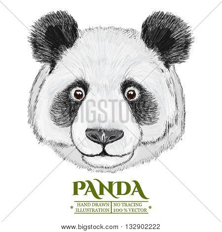 Panda portrait cute panda head hand drawn isolated on white vector