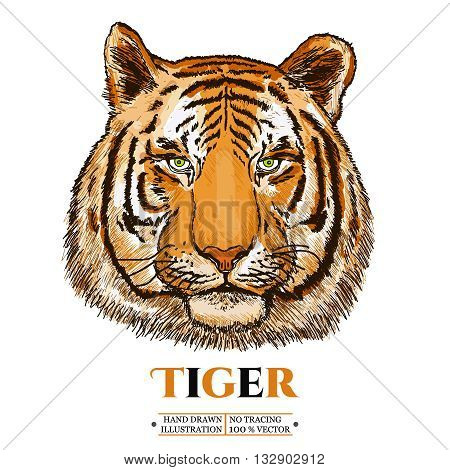 Tiger realistic portrait isolated on white vector illustration
