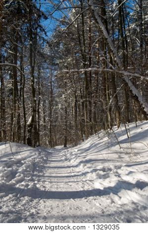 Winter Path In A Forest