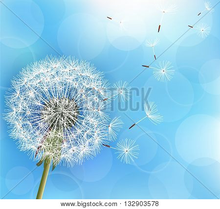 Trendy nature light blue background with flower dandelion blowing seeds. Stylish floral summer or spring wallpaper. Vector illustration