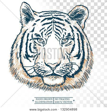 Tiger portrait isolated on white hand drawn vector illustration